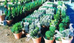 Wholesale Topiary Showcase