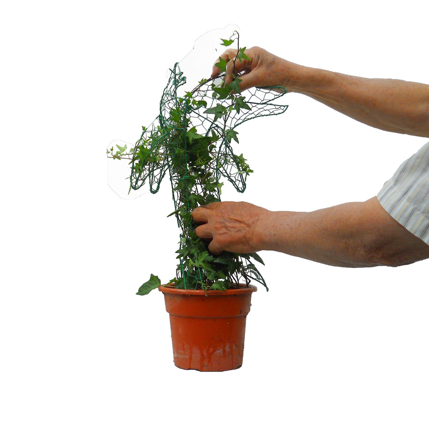 Image Of How To Build An Ivy Topiary Ivy Topiary Made EasyHow to ...