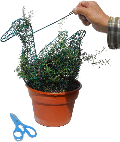 Instructions to fill a mini topiary with moss and a plant